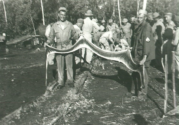 34_Milne_Bay_Displaying_Python_Skin
